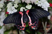 Высоко доходный  бизнес ферма Живых Тропических Бабочек  из ЮАР